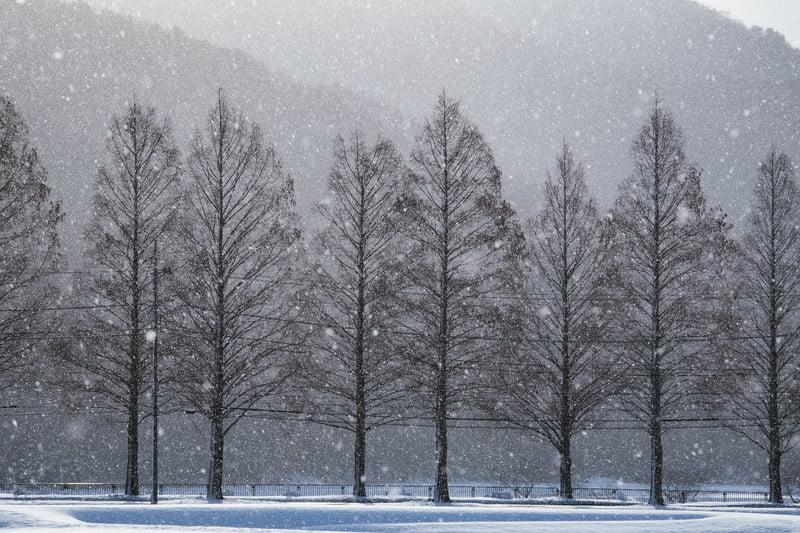 田沢湖雪まつり 2019情報