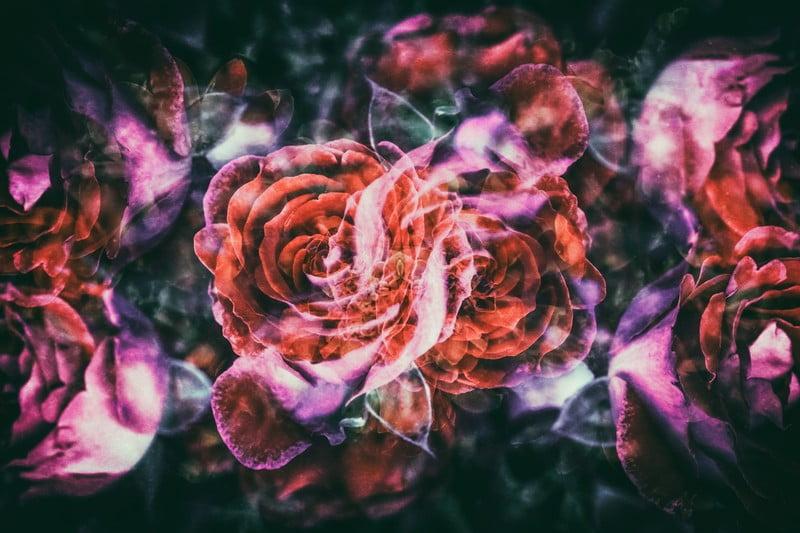 神代植物園のアクセスは?バラの種類と香りについて5月の見どころは?