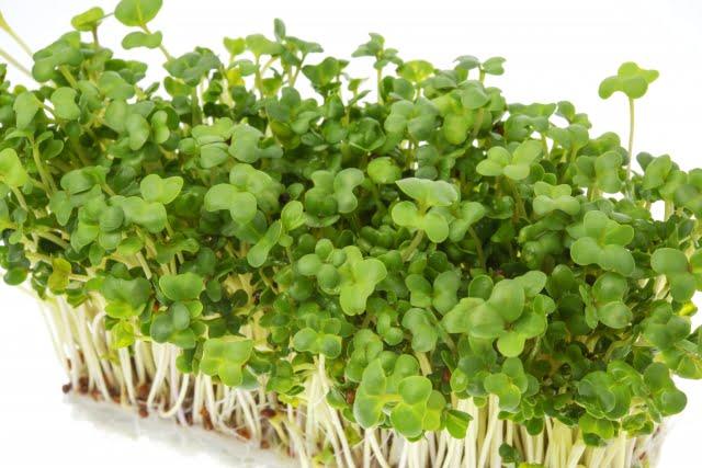 ブロッコリースプラウトとカイワレ大根の違いとおすすめの食べ方とレシピ1位
